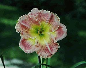flowerused