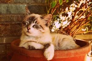 kitten-asleep-in-a-pot-1995961_640
